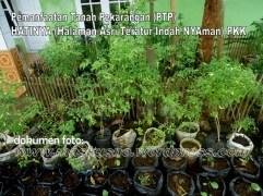 Pemanfaatan Tanah Pekarangan(PTP) Program PKK (19)