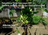 Pemanfaatan Tanah Pekarangan(PTP) Program PKK (21)