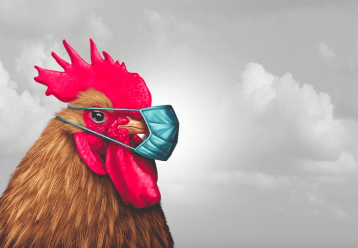 6 oportunidades de COVID-19 para la industria avícola