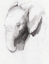 Elephant Rough