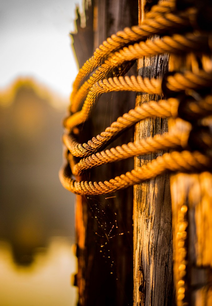 weathered cables hold decayed wood pilings together