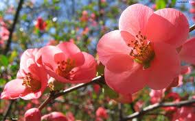 belle fleur rose pistil méditer au travail sophrologie