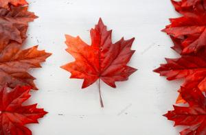 Beca Canadá