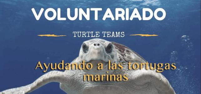 Voluntariados Internacionales cerca a la playa con tortugas ! – Turtle Team