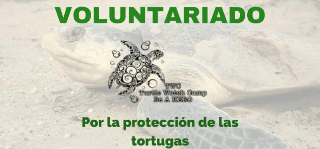 Voluntariado con tortugas en Malasia – para amantes de los animales