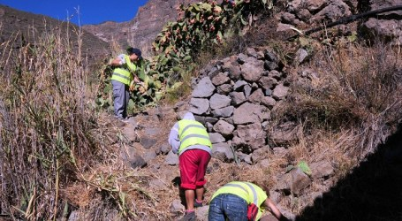San Bartolomé de Tirajana recupera sus caminos agrícolas