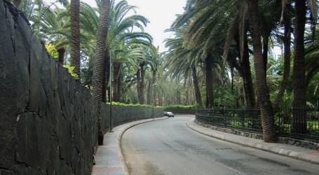 El Cabildo presenta un plan de acciones para salvar la palmera canaria