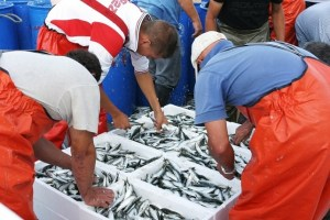 Descarga de pescado fresco