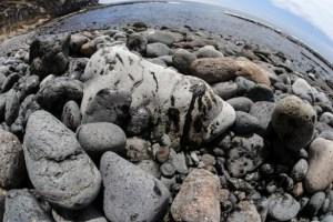 Fuel del Oleg Naydenov en la costa del sur de Gran Canaria