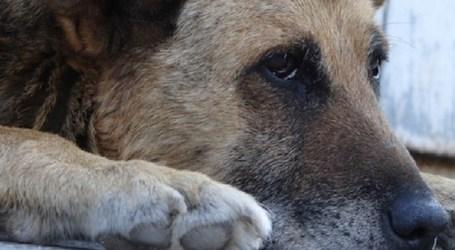El Ayuntamiento de San Bartolomé de Tirajana licita la recogida de animales