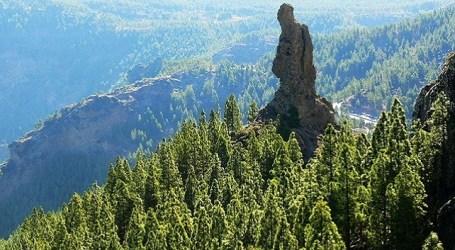 Gran Canaria se mueve por el clima