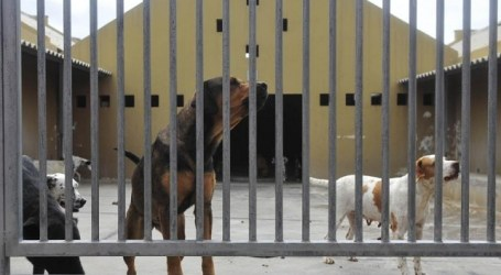 El Cabildo propondrá a los ayuntamientos de Gran Canaria un Pacto Insular por el Bienestar Animal