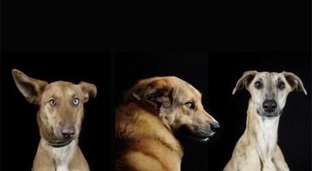 Maspalomas News se suma a la Red Canaria de Animales sin Hogar