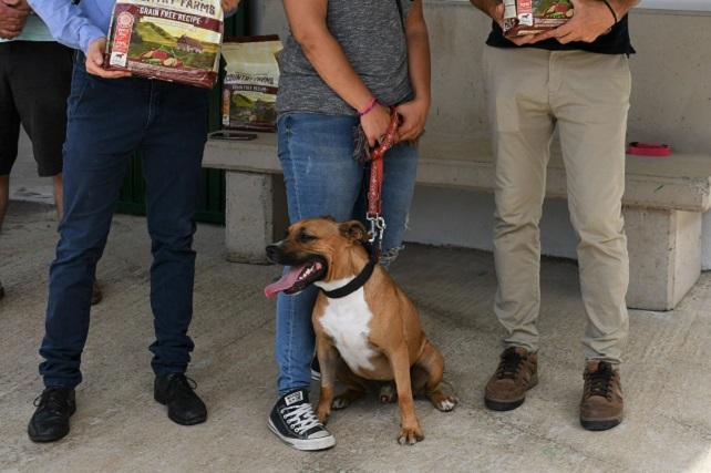 Los voluntarios del albergue municipal de Mogán adoptan todos los perros Cuando se les informó que la instalación cerraría sus puertas de forma temporal debido a la Covid-19, no dudaron en llevárselos a casa