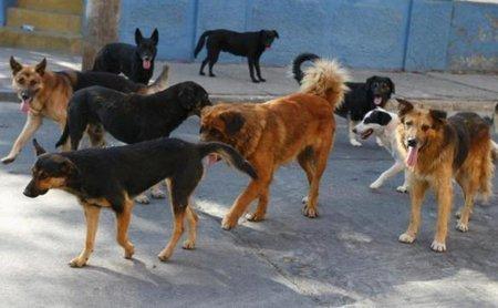 perros-6