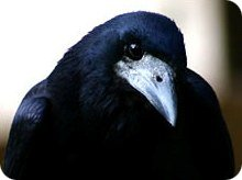 betty-bird