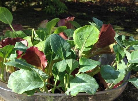 Apesar do Inverno estar a chegar, as plantações continuam!
