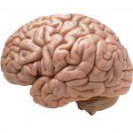 Massage Antwerpen - stress en hersenen
