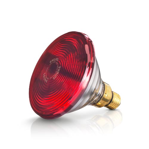 Bóng đèn hồng ngoại philip 150W
