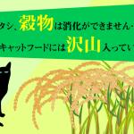グレインフリーキャットフードとは?猫の内臓に合わせて穀物を使用していないレシピ