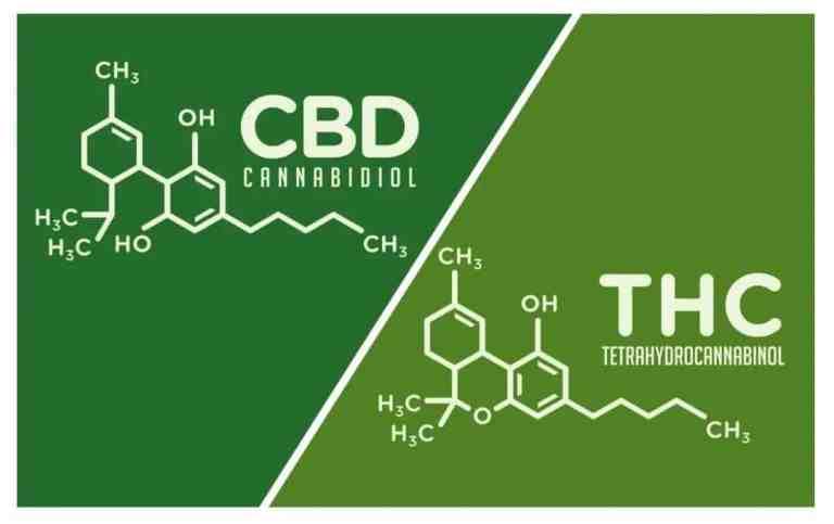 THC vs CBD   The Differences