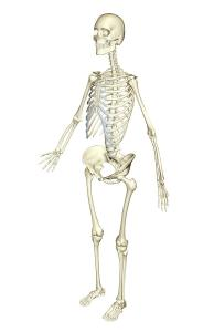 Well purposed massage has the following benefits to our skeletal system.