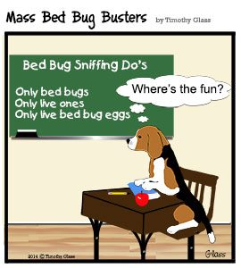 bed bug dog