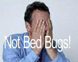 man horrified of bedbugs