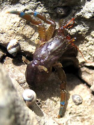 poor homeless hermit crab