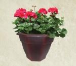 10-in-geranium-red-outdoor-wholesale