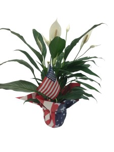 masson-farms-of-new-mexico-patriotic-wrap