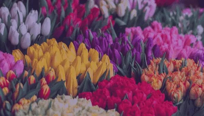 Best flower website templates and themes. 25 Flower Shop Website Templates In 2021 Masterbundles