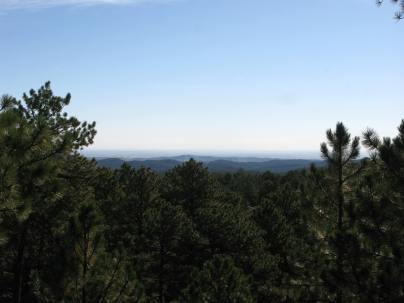 Black Hills National Forest from Mount Rushmore