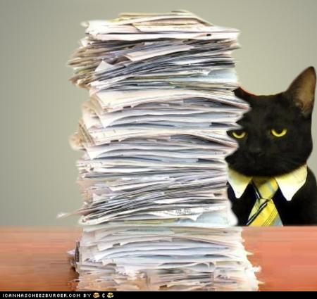 business-cat-paperwork