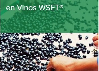 Cualificación de Nivel 3 en Vinos WSET®