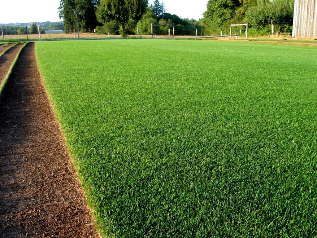 doing rye grass right