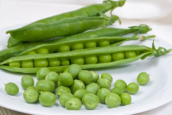 There is nothing better than fresh green peas from the garden.  Photo by Bruce Leander.