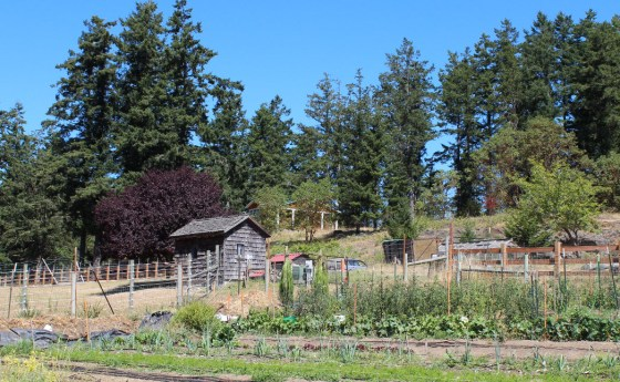 The fields of the Good Earth Center.  If you are going to farm, you might as farm in a place that looks like this!