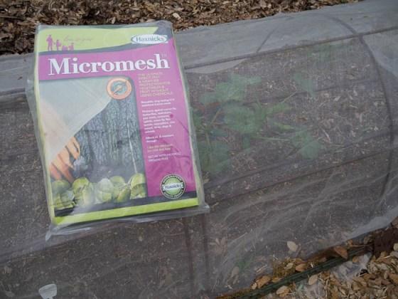 Micromesh-Squash-Vine-Borer