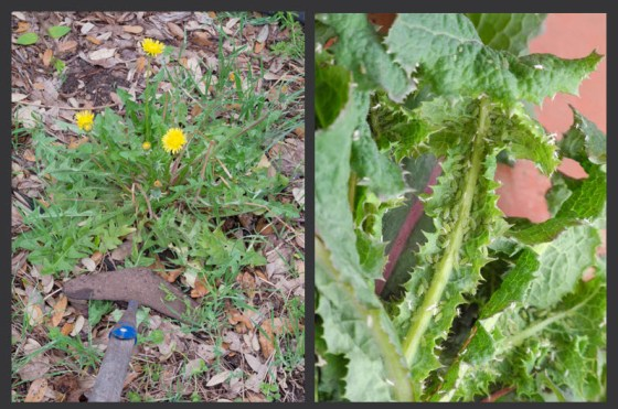Spring-Weeds