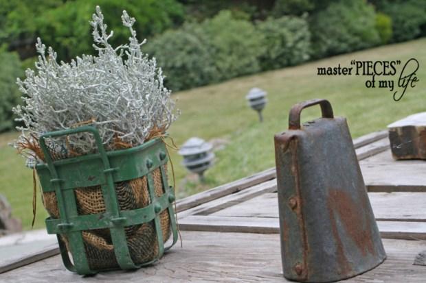 Container gardening 2020 11