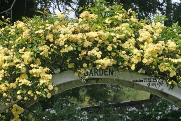 Spring gardening3
