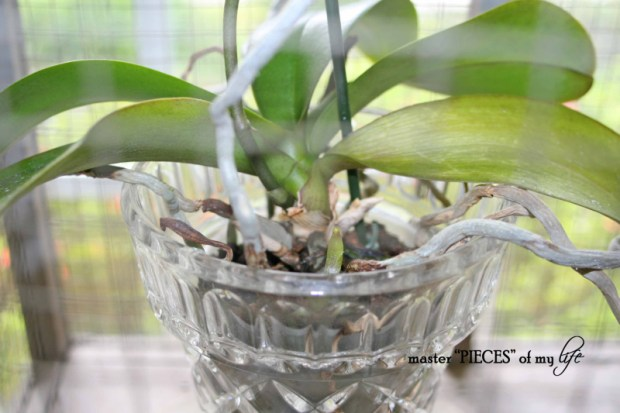 Orchids 101-5