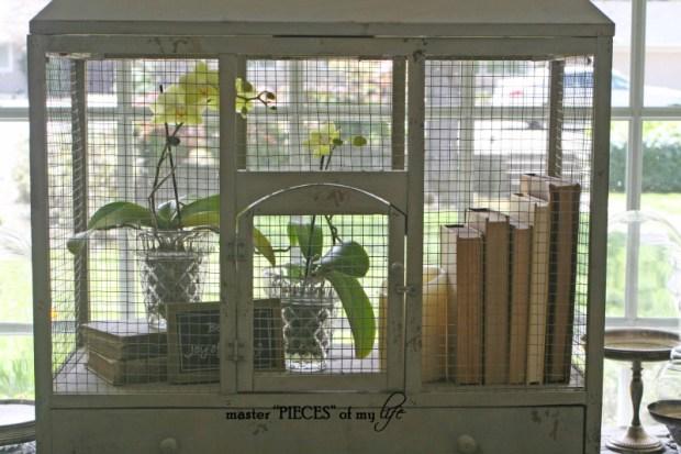Orchids 101-6
