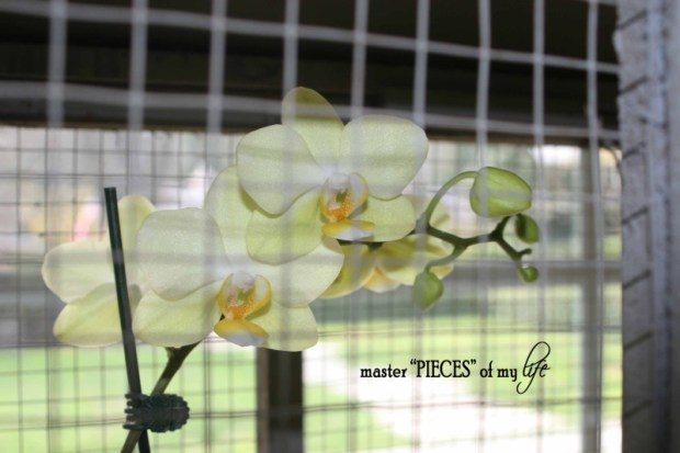 Orchids 101-10