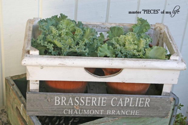 Fall container gardening3