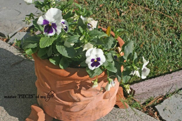 Fall container gardening8