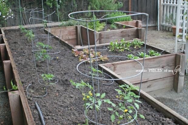 Gardening 2018-3