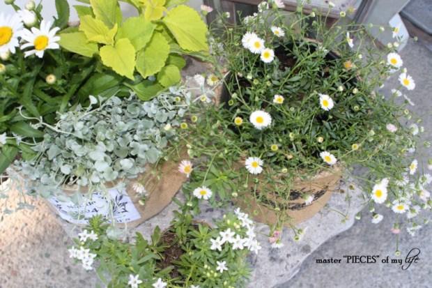 Burlap container gardening 10