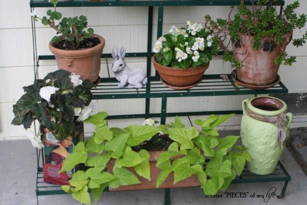 Container gardening 3